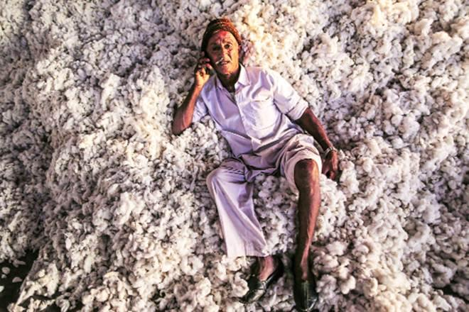cotton, cotton industry, cotton sector