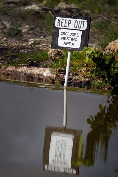 A sign reads, 'keep out crocodile nesting area', as it is posted on the edge of a canal near the Florida Power & Light's Turkey Point Nuclear Power Plant where they protect the crocodile and conduct research by counting their nests annually to record population changes June 28, 2012 near Florida City, Florida. The American crocodile had been on the endangered species list but has been taken off that list and put on the threatened list. With the success of the program to help save the crocodile their populations around developed areas will continue to grow which means that there may be more encounters between humans and the reptile. (Photo by Joe Raedle/Getty Images)
