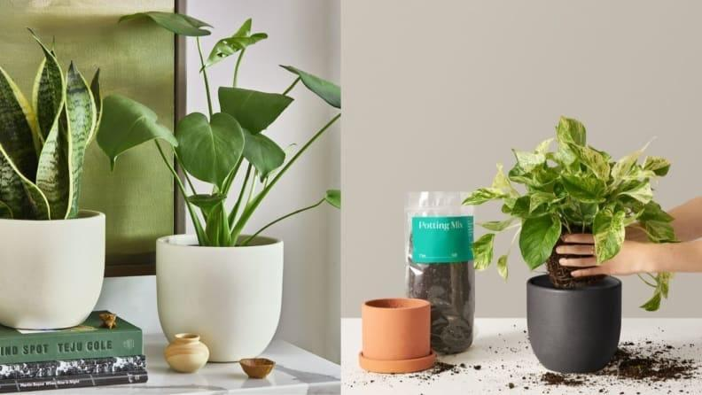 Best Graduation Gifts for Him: A Sill plant subscription