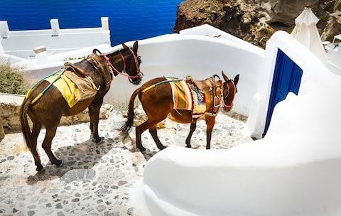 Many of the paths on Santorini are ill-suited to hooves - Credit: VENTDUSUD