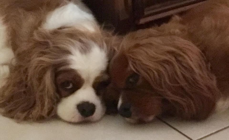 Toby and Jaxon were inseparable before the four-year-old died on February 11. Source: Supplied