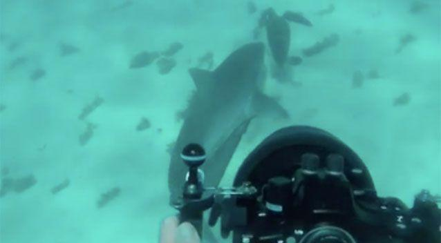Timothy van Beelen spotted the shark in the water and decided to take a closer look. Source: Timothy van Beelen via Storyful
