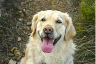 """<p>If you're lucky enough to have a <a href=""""https://www.womansday.com/life/pet-care/g26061710/cute-dog-pictures/"""" rel=""""nofollow noopener"""" target=""""_blank"""" data-ylk=""""slk:cute pooch"""" class=""""link rapid-noclick-resp"""">cute pooch</a> in your life, then you know that a dog's love is unconditional. You'd be hard-pressed to find a furry friend as loyal or as lovable as a pup, and even after your pet passes away, the good times you shared together will likely stick with you for the rest of your life. The best dog quotes perfectly capture that special bond shared between canines and their owners, ranging from <a href=""""https://www.womansday.com/life/pet-care/a30928651/dog-puns/"""" rel=""""nofollow noopener"""" target=""""_blank"""" data-ylk=""""slk:funny dog puns"""" class=""""link rapid-noclick-resp"""">funny dog puns</a> to wise to heartfelt sayings. Whether you're looking for an <a href=""""https://www.womansday.com/life/pet-care/g29011069/dog-instagram-captions/"""" rel=""""nofollow noopener"""" target=""""_blank"""" data-ylk=""""slk:Instagram caption for your dog pics"""" class=""""link rapid-noclick-resp"""">Instagram caption for your dog pics</a> or feeling nostalgic for a late pet, these quotes about pups perfectly sum up the experience of being a dog owner.<br></p><p>A dog's life tends to go by far too fast, so it's important to celebrate every moment you have with your pet. You can also learn a lot more from your fur baby than you may realize, like the importance of living in the now and loving without reservation. These hilarious, sweet, and sentimental quotes about dogs are sure to make your heart grow three sizes (and they're also ideal for sharing with all your fellow <a href=""""https://www.womansday.com/life/g26913463/gifts-for-dog-lovers/"""" rel=""""nofollow noopener"""" target=""""_blank"""" data-ylk=""""slk:dog lovers"""" class=""""link rapid-noclick-resp"""">dog lovers</a>). </p>"""