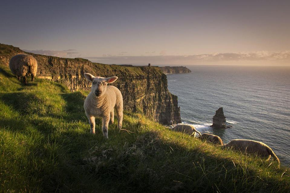 """<p>September is ideal for exploring the legendary Irish countryside in all of its green, verdant, bucolic glory (on July 19, Ireland lifted its 14-day quarantine requirement for vaccinated Americans). Fly into Shannon and head first for <a href=""""https://www.dromoland.ie/"""" rel=""""nofollow noopener"""" target=""""_blank"""" data-ylk=""""slk:Dromoland Castle"""" class=""""link rapid-noclick-resp"""">Dromoland Castle</a>, a 16th-century castle that sits on 450 acres and is brimming with activities for every type of traveler, from golfers to gardeners (André le Nôtre, known for designing the gardens at Versailles, also did the gardens here). After a few days of discovering County Clare's treasures, such as the dramatic Cliffs of Moher, drive up to County Mayo, home of the grand <a href=""""https://go.redirectingat.com?id=74968X1596630&url=https%3A%2F%2Fashfordcastle.com%2F&sref=https%3A%2F%2Fwww.townandcountrymag.com%2Fleisure%2Ftravel-guide%2Fg10370949%2Fbest-places-to-travel-in-september%2F"""" rel=""""nofollow noopener"""" target=""""_blank"""" data-ylk=""""slk:Ashford Castle"""" class=""""link rapid-noclick-resp"""">Ashford Castle</a>, a Medieval stunner (Victorian additions were added in 1852) that once belonged to the Guinness family. The hospitality—and attention to detail—is unparalleled here, as are the list of activities, chief among them the can't-miss experience at the hotel's Falconry School of Ireland, the oldest in the country. </p><p><a class=""""link rapid-noclick-resp"""" href=""""https://go.redirectingat.com?id=74968X1596630&url=https%3A%2F%2Fwww.tripadvisor.com%2FHotel_Review-g212532-d293320-Reviews-Dromoland_Castle_Hotel-Newmarket_on_Fergus_County_Clare.html&sref=https%3A%2F%2Fwww.townandcountrymag.com%2Fleisure%2Ftravel-guide%2Fg10370949%2Fbest-places-to-travel-in-september%2F"""" rel=""""nofollow noopener"""" target=""""_blank"""" data-ylk=""""slk:Read Reviews"""">Read Reviews</a> <em>Dromoland Castle</em></p><p><a class=""""link rapid-noclick-resp"""" href=""""https://go.redirectingat.com?id=74968X1596630&url=https%3A%2F%2Fwww.tripadviso"""