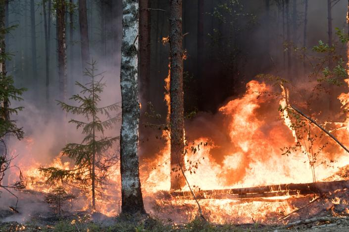Trees burn at during a forest fire near the Syamozero Lake in Pryazhinsky District of the Republic of Karelia, about 700 km.(438 miles) south-west of Moscow, Russia on Wednesday, July 21, 2021. Volunteers have helped in Karelia as well. Anna Gorbunova, coordinator with the Society of Volunteer Forest Firefighters that focuses on the Ladoga Skerries national park in Karelia, told The Associated Press last week that the blazes there this year are the biggest since 2008. (AP Photo/Ilya Timin)