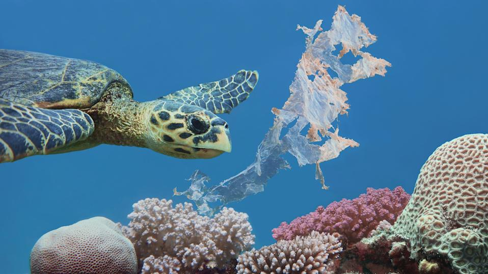 Green turtles face many major threats, and the biggest threat comes from marine debris.