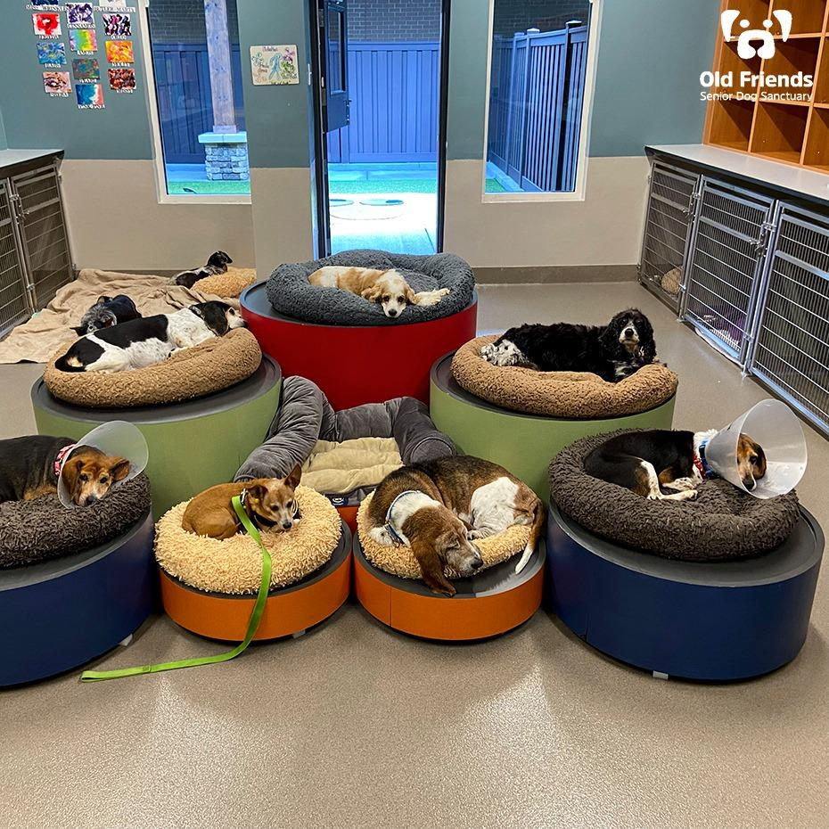 Virtual items could translate to real help for one of the dogs at Tennessee's Old Friends Senior Dog Sanctuary.