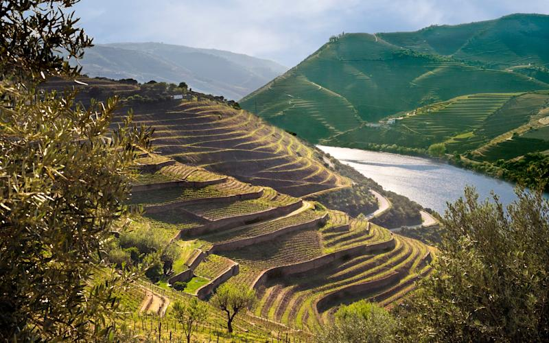 Cruise through Portugal, or find vineyards in Essex closer to home - Jon Bower at Apexphotos