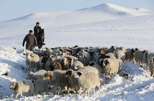 <p>Tuvan shepherds herd sheep and goats at the nomad camp of farmer Tanzurun Darisyu in the Kara-Charyaa area south of Kyzyl town, the administrative center of the Republic of Tuva (Tyva region) in southern Siberia, Russia, on Feb. 14, 2018. (Photo: Ilya Naymushin/Reuters) </p>