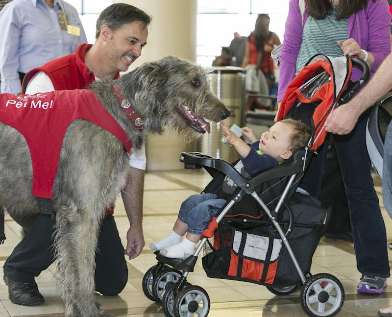 In this photo taken Tuesday, May 21, 2013, Pets Unstressing Passengers (PUPs) volunteer Brian Valente, left, with his dog, Finn, greet the Bloom family with their 13-month-old son, Jacob, at the Los Angeles International Airport  terminal. The Los Angeles International Airport has 30 therapy dogs and is hoping to expand its program. The dogs are intended to take the stress out of travel: the crowds, long lines and terrorism concerns. (AP Photo/Damian Dovarganes)