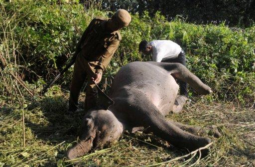 Indian forestry workers look at the body of an elephant after it was struck by a train near Siliguri on December 3, 2012