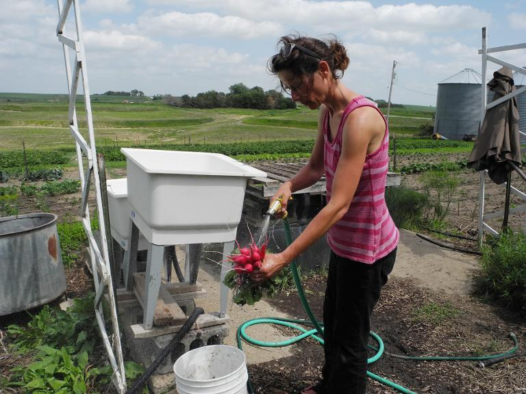 Danelle Myer washes radishes just picked on her farm, June 18, 2014 in Logan, Iowa