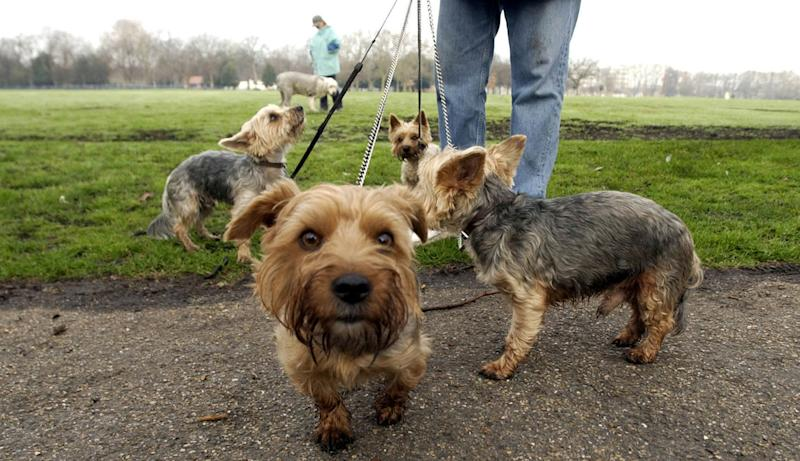 Walking dogs is just one of the gigs you can pick up through traditional means, or via one of the apps below. (Evening Standard)