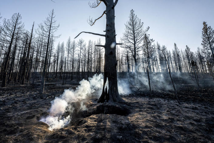 Spot fires smolder near trees damaged by the Bootleg Fire on Wednesday, July 21, 2021 in Bly, Ore. (AP Photo/Nathan Howard)
