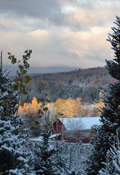 """<p><strong>Craftsbury, Vermont</strong> (Starting November 29) </p><p><a href=""""https://moffattstreefarm.squarespace.com/"""" rel=""""nofollow noopener"""" target=""""_blank"""" data-ylk=""""slk:Moffatt's Tree Farm"""" class=""""link rapid-noclick-resp""""><strong>Moffatt's Tree Farm</strong></a> has been helping people find their perfect tree for generations. After selecting your tree, stop by the choose and cut shack to pick out a bottle of their homemade syrup and a wreath to hang on your door.</p>"""