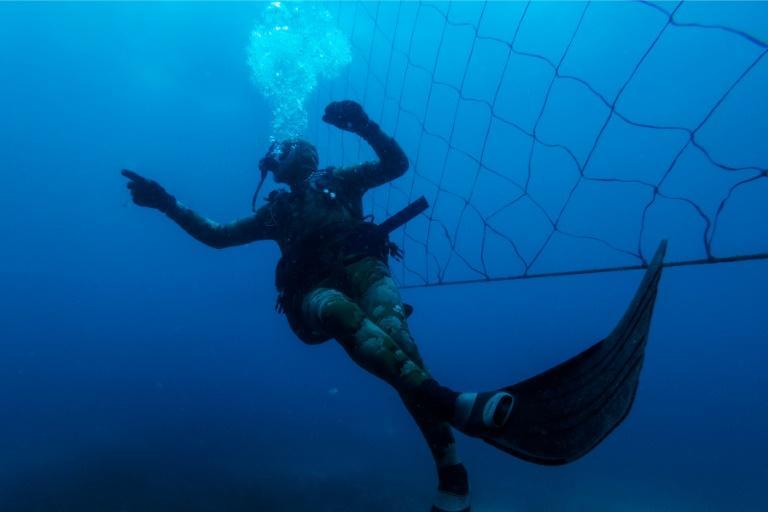Dozens of South African beaches use shark nets, which activists say are ineffective and harm wildlife