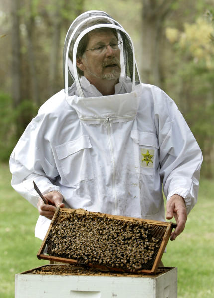 FILE - In this April 25, 2007 file photo, Jeffery Pettis, a top bee scientist at the Agriculture Department's Bee Research Laboratory, talks about his work with honeybees, in Beltsville, Md. A new federal report blames a combination of problems for a mysterious and dramatic disappearance of U.S. honeybees since 2006. The factors cited include a parasitic mite, multiple viruses, bacteria, poor nutrition and pesticides. Experts say having so many causes makes it harder to do something about what's called colony collapse disorder. The disorder has caused as much as one-third of the nation's bees to just disappear over the winter each year since 2006. The report was issued Thursday by the Agriculture Department and the Environmental Protection Agency. (AP Photo/Haraz N. Ghanbari, File)