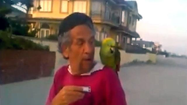 Opera Singing Parrot Lost in New York Aria