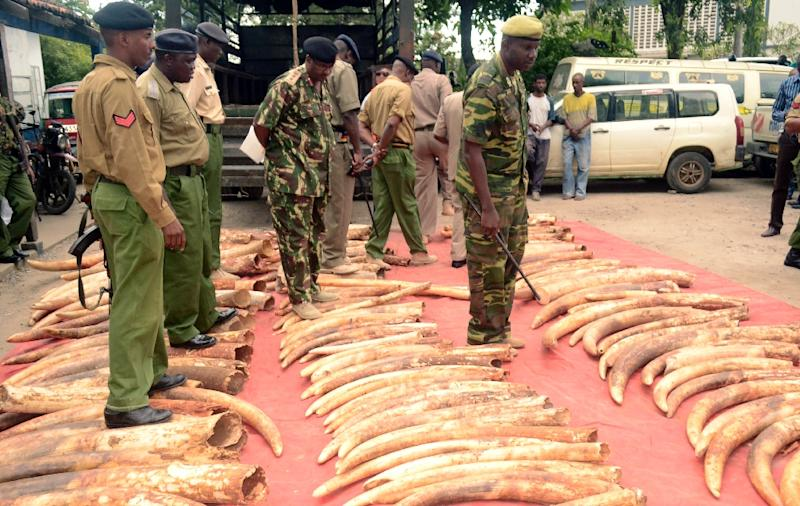 Kenyan police officers look on June 5, 2014 at 302 pieces of ivory, including 228 elephant tusks, found and seized the day before in a warehouse during a raid in the port city of Mombosa (AFP Photo/)