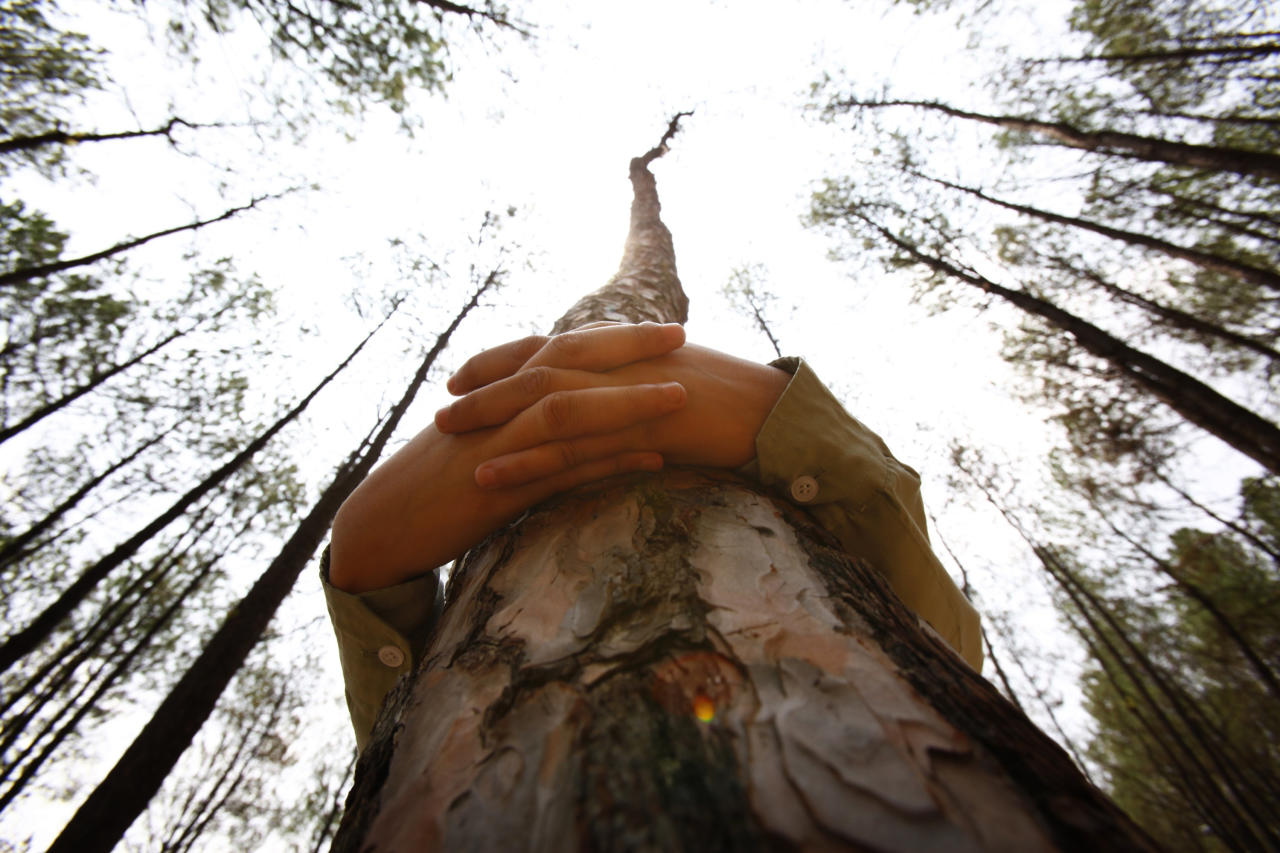 A Nepalese student hugs a tree during a mass tree hugging on the World Environment Day on the outskirts of Katmandu, Nepal, Thursday, June 5, 2014. More than 2,000 people gathered in Nepal's capital on Thursday in a bid to set a world record for the largest tree hug. (AP Photo/Niranjan Shrestha)