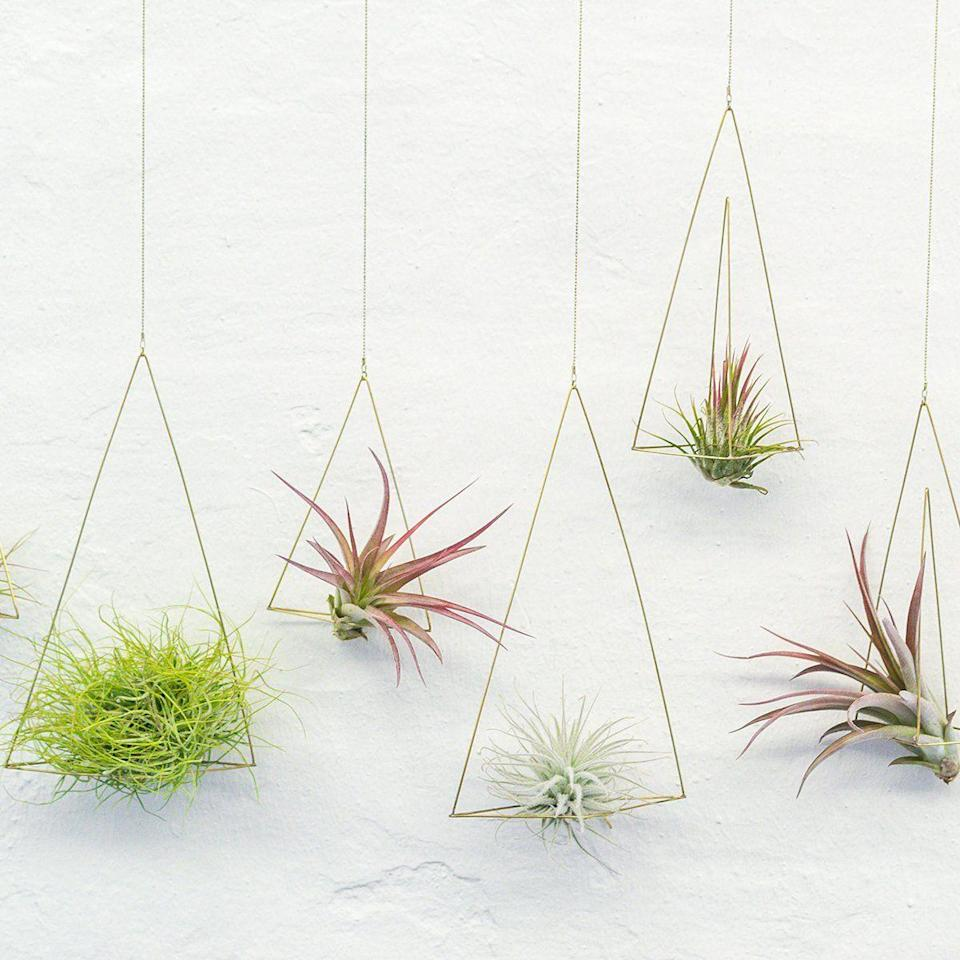 """<p>darlingspring.com</p><p><strong>$74.00</strong></p><p><a href=""""https://darlingspring.com/collections/objects-art-books/products/triangle-air-planter-set"""" rel=""""nofollow noopener"""" target=""""_blank"""" data-ylk=""""slk:Shop Now"""" class=""""link rapid-noclick-resp"""">Shop Now</a></p><p>Banu Tanguler and Eril Serbetci bfounded Darling Spring in the hopes that it would become a platform to support the creative work of women globally. </p>"""