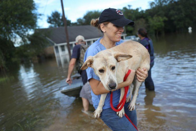 Ann Chapman from the Louisiana State Animal Response Team carries a dog she helped rescue from flood waters in Baton Rouge, Louisiana. (Photo: Joe Raedle/Getty Images)