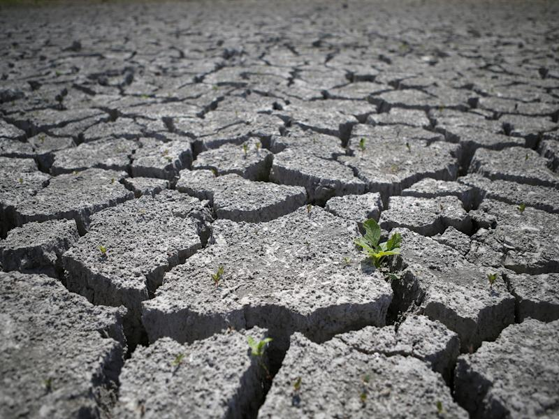 Agriculture will suffer if land degradation continue at current rates, particularly in India, China and sub-Saharan Africa: AFP/Getty