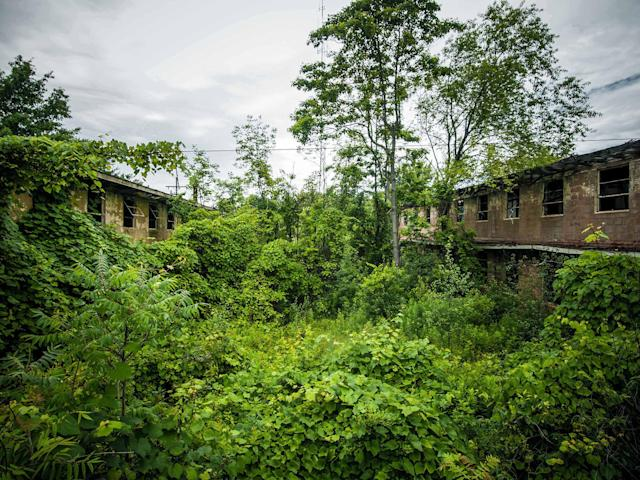 <p>Abandoned overgrown U.S. armory in Ohio. (Photo:Johnny Joo/Caters News) </p>