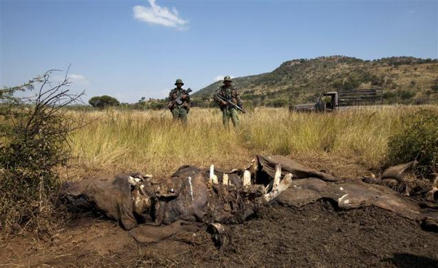 Members of the Pilanesberg National Park Anti-Poaching Unit (APU) stand guard as conservationists and police investigate the scene of a rhino poaching incident April 19, 2012.