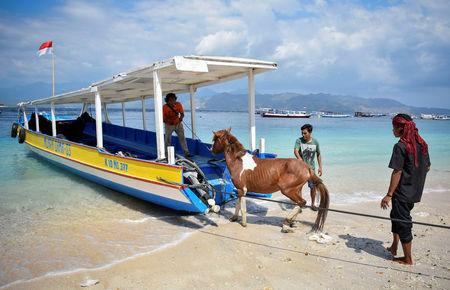 Residents transport a horse as they evacuate their domestic animals following Sunday's  earthquake on Gili Trawangan island, North Lombok, Indonesia August 8, 2018 in this photo taken by Antara Foto.  Antara Foto/Ahmad Subaidi/ via REUTERS