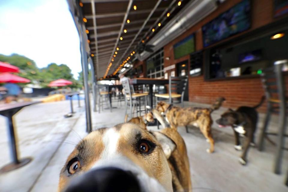 Lucky Dog Bark & Brew on Thrift Road in Charlotte.