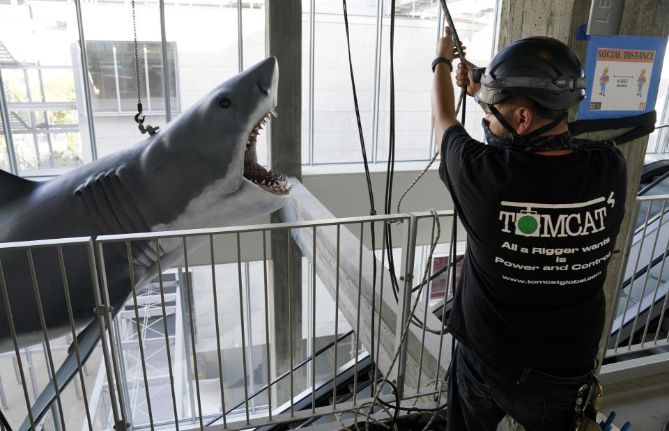 """A worker helps lift a fiberglass replica of Bruce, the shark featured in Steven Spielberg's classic 1975 film """"Jaws,"""" into a suspended position for display at the new Academy of Museum of Motion Pictures, Friday, Nov. 20, 2020, in Los Angeles. The museum celebrating the art and science of movies is scheduled to open on April 30, 2021. (AP Photo/Chris Pizzello)"""