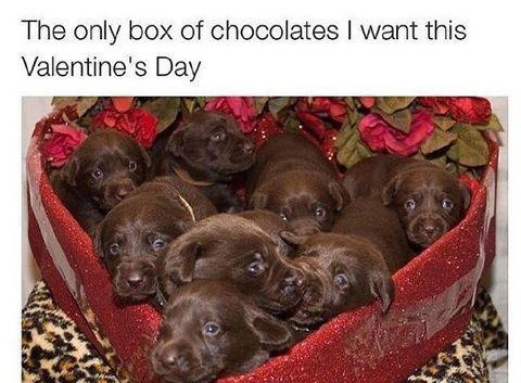 """<p>Forget boxes of chocolates. <em>Puppies</em> are really what we really want for Valentine's Day this year! </p><p><strong>RELATED:</strong> <a href=""""https://www.goodhousekeeping.com/holidays/valentines-day-ideas/g5101/last-minute-valentine-day-gifts/"""" rel=""""nofollow noopener"""" target=""""_blank"""" data-ylk=""""slk:25 Last-Minute Valentine's Day Gifts That'll Be Delivered to Your Special Someone Just in Time"""" class=""""link rapid-noclick-resp"""">25 Last-Minute Valentine's Day Gifts That'll Be Delivered to Your Special Someone Just in Time</a></p><p><a href=""""https://www.instagram.com/p/BfMdsXwh2WY/?utm_source=ig_embed"""" rel=""""nofollow noopener"""" target=""""_blank"""" data-ylk=""""slk:See the original post on Instagram"""" class=""""link rapid-noclick-resp"""">See the original post on Instagram</a></p>"""