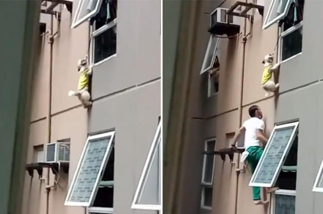Dog clings to 30-foot-high ledge after falling through window