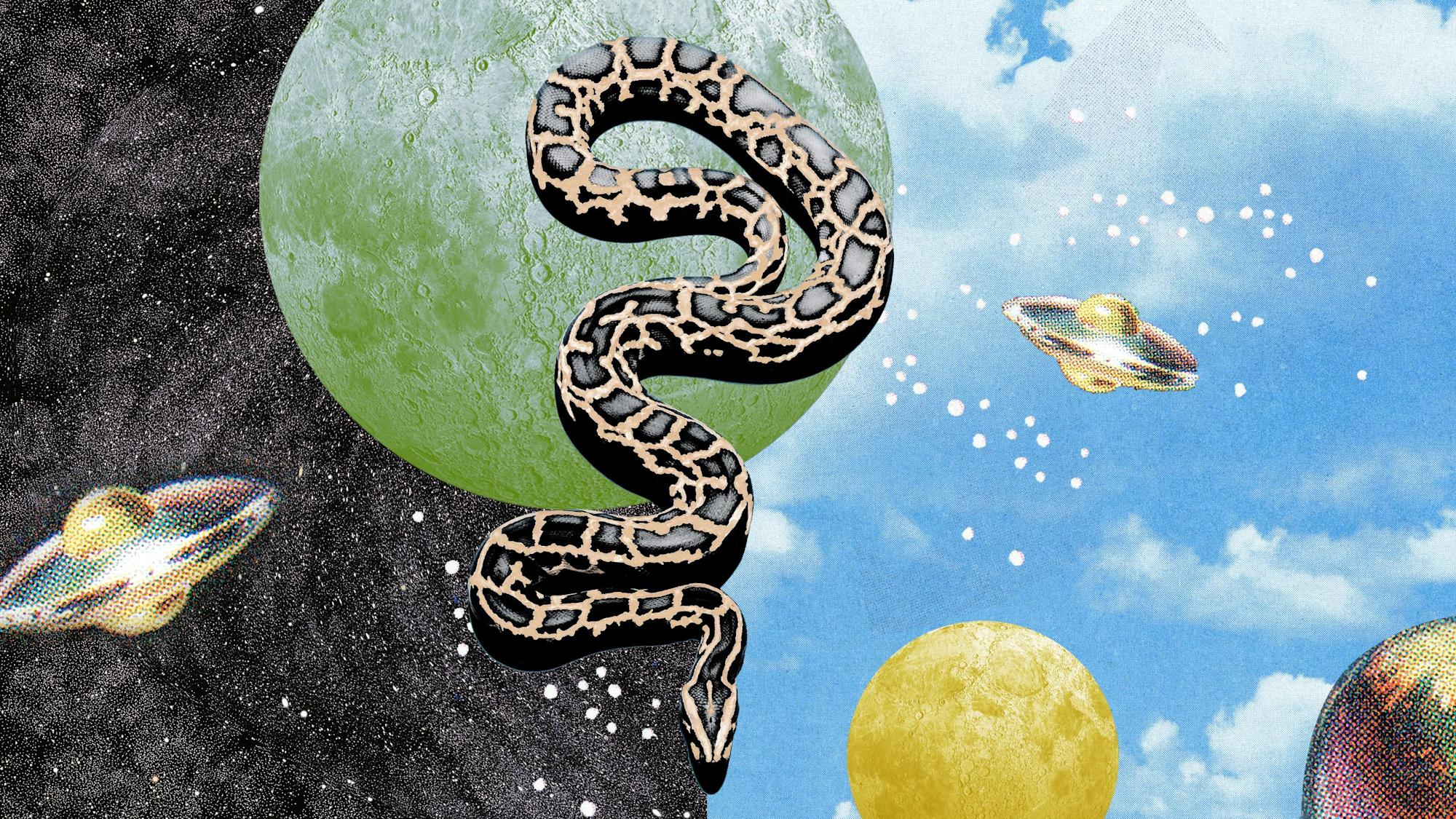 What Do Dreams About Snakes Mean