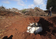 Resident Walter Ritte walks past dead axis deer in a large pit on Jan. 15, 2021 on the island of Molokai in Hawaii. Axis deer, a species native to India that were presented as a gift from Hong Kong to the king of Hawaii in 1868, have fed hunters and their families on the rural island of Molokai for generations. But for the community of about 7,500 people where self-sustainability is a way of life, the invasive deer are a cherished food source but also a danger to the island ecosystem. Now, the proliferation of the non-native deer and drought on Molokai have brought the problem into focus. Hundreds of deer have died from starvation, stretching thin the island's limited resources. (Cory Lum/Honolulu Civil Beat via AP)