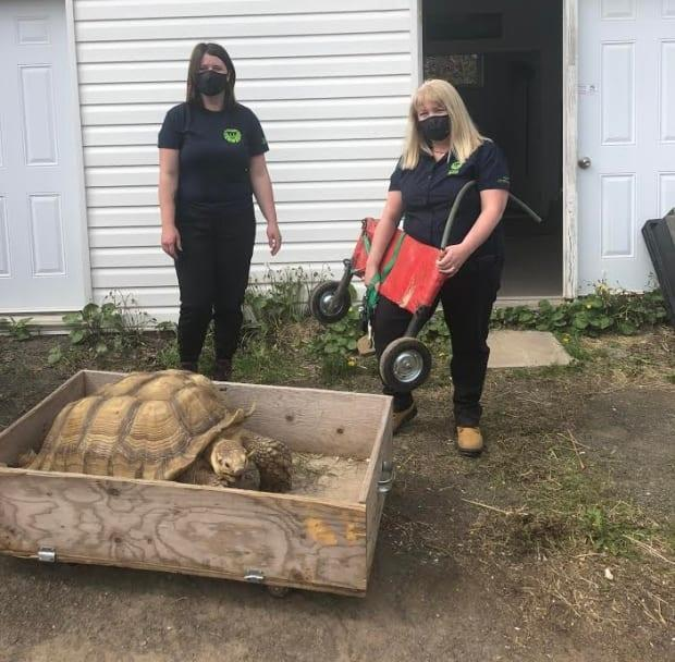 Jill Marvin, right,  the zoo's director, said the zoo will do everything it can to care for the tortoise.