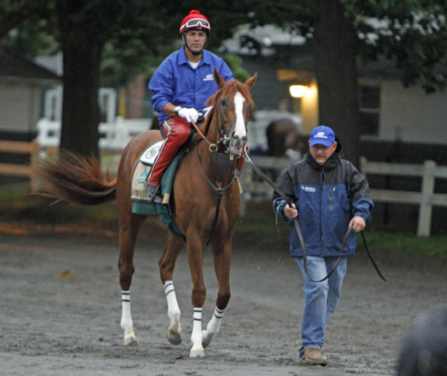 California Chrome is led to the race track by assistant trainer Alan Sherman, with exercise rider Willie Delgado aboard at Belmont Park race track in Elmont, NY., Thursday, June 5, 2014. Kentucky Derby and Preakness Stakes winner California Chrome will try for the Triple Crown on Saturday, June 7th. (AP Photo/Garry Jones)