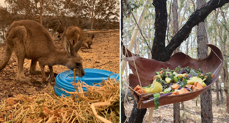 Split screen. Three kangaroos drink from blue water containers at Wild2Free. Food hanging from a tree for wildlife.