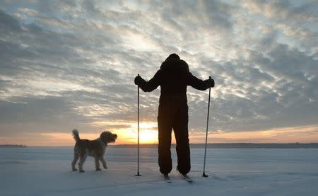 A cross country skier watches as the sun rises with a dog, on a snow covered lake in the Kawartha Lakes region of Ontario in this March 10, 2015 file photo. REUTERS/Fred Thornhill/Files