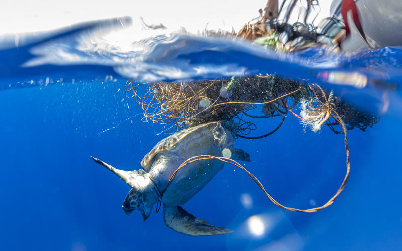 A Loggerhead Sea Turtle was pictured after it got trapped in a free floating fishing net off in the Azores. (Caters)