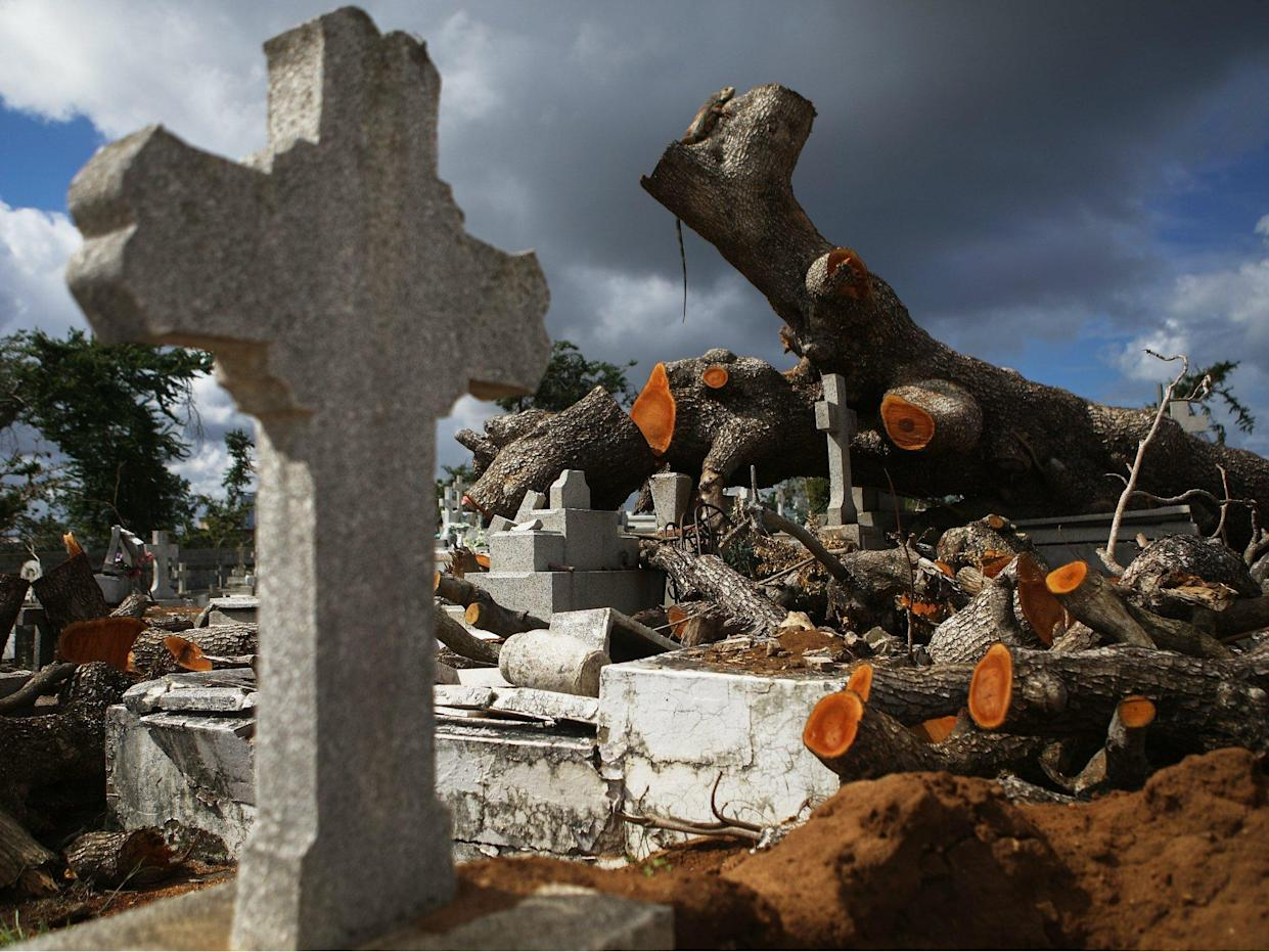A tree toppled by Hurricane Maria rests over damaged graves in the Villa Palmeras cemetery on 23 December 2017 in San Juan, Puerto Rico: Getty