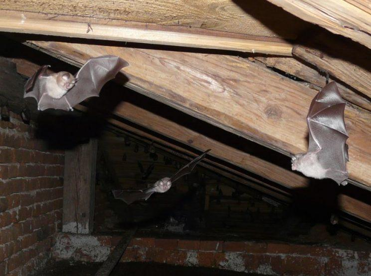 Batty idea? The £3.8million project will last for five years (Twitter/HeritageLottery)