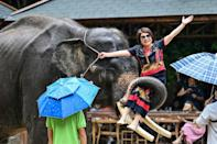 An elephant in the street is now a common sight for Chinese residents of the animals' home territory on the Myanmar-Laos border, where a recovering elephant population is being squeezed into ever-shrinking habitat