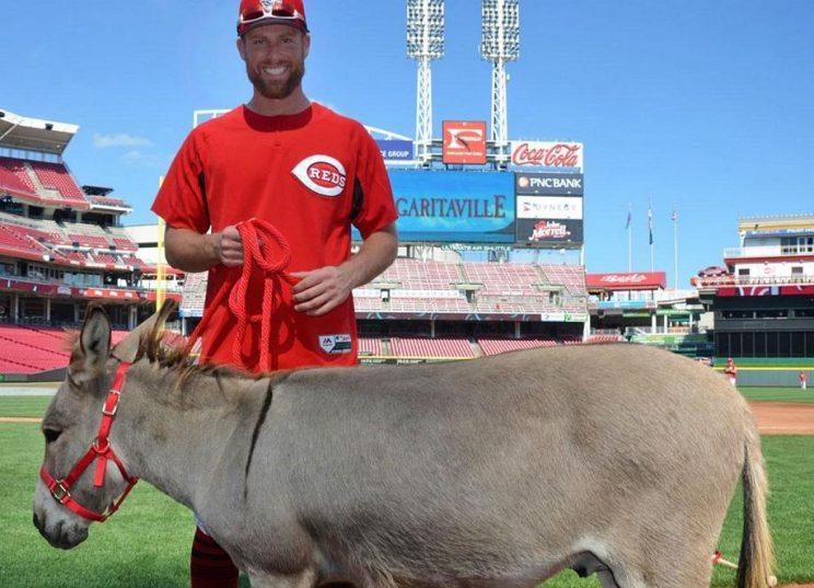 Reds All-Star Zack Cozart poses with Amos. He'll receive a different donkey after the season when Joey Votto pays off his All-Star bet. (Reds)