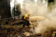 Firefighter Sal Valencia hoses down a hot spot in the Trail of 100 Giants grove of Sequoia National Forest, Calif., on Monday, Sept. 20, 2021. (AP Photo/Noah Berger)