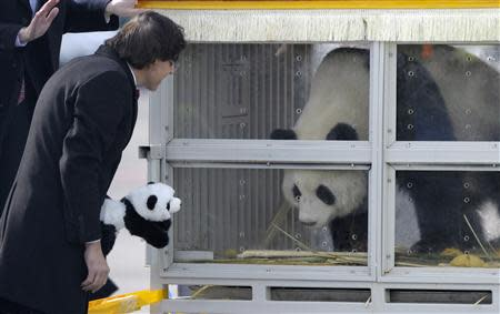 Belgium's Prime Minister Elio Di Rupo looks at the giant panda, Hao Hao, at the Brussels airport