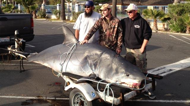 Thrill Seekers Catch Record-Breaking Shark