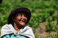 Natividad Quispe's work on a coca leaf plantation is painstaking but her commnity has done this for generations