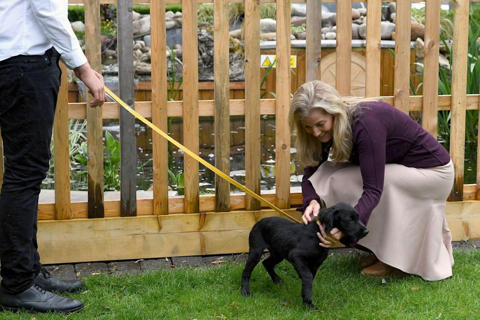 <p>The Countess of Wessex met Hedrix, a 15-week-old cocker spaniel puppy, during a visit to a pub in Surrey.</p>